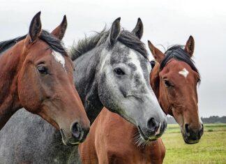 Poidła dla koni