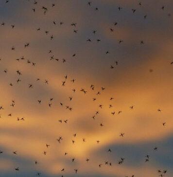 Skuteczne preparaty na komary i inne owady