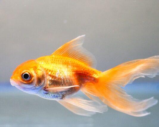 Oświetlenie do twojego akwarium